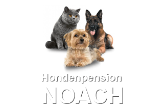 Hondenpension noach
